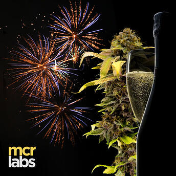 MCR Labs will remain the consumer's biggest advocate through 2020 and all the years to come