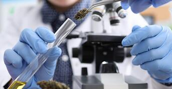 The quantification of each cannabinoid became more precise with every new cannabinoid added to the scope of the test