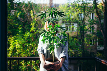 We often test for homegrowers looking for potency data