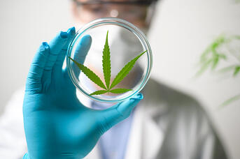 Cannabinoids, such as THC and CBD, naturally degrade in cannabis plants over time.